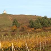 Marie Kachyňová – Podzim v bílovických vinohradech 1